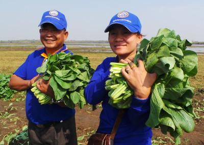 Koy en Sareth oogsten groenten van het nieuwe irrigatie project.