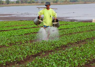 Deze boer begiet zo'n 6 keer per dag zijn groente. Die groeit dan ook letterlijk als kool.