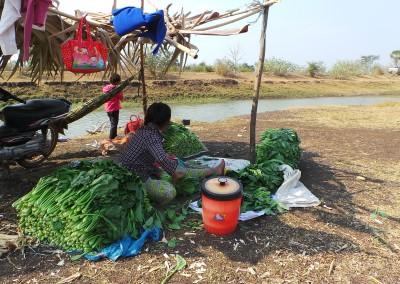 De geoogste groenten wordt klaar gemaakt voor de markt